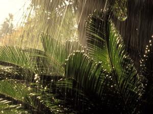 Lluvia en la jungla