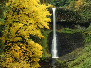 Árbol junto a la cascada