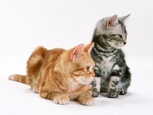 Gatos de diferente color
