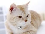 Un gato con cascabel