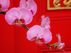 Rama con orquídeas