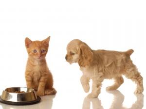 Cachorro caminando hacia un gatito