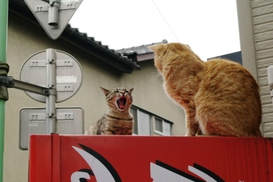 Gatos en las alturas