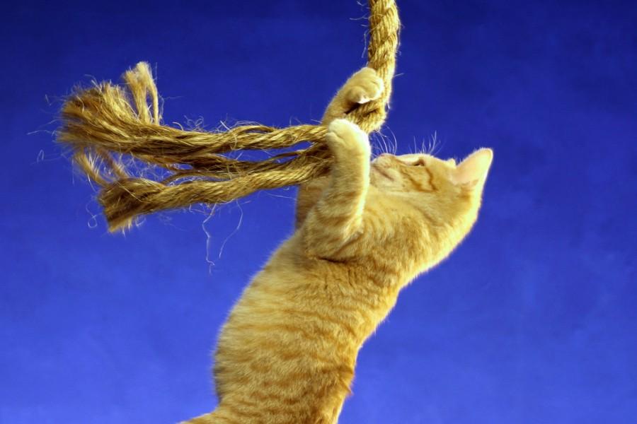 Gato sujeto a una cuerda