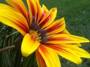 Flor amarilla en un jardín