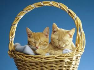 Gatos dormidos en una cesta de mimbre