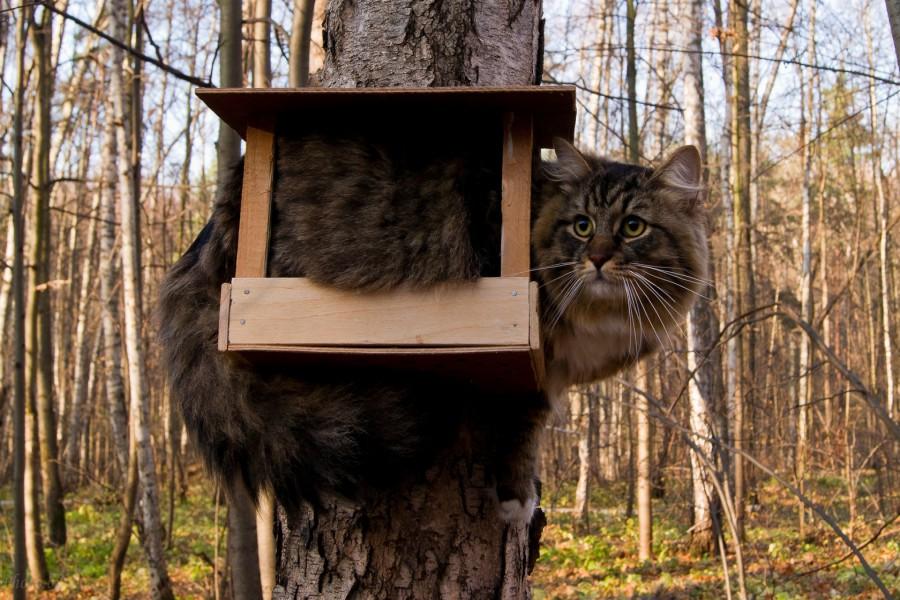 Gato metido en una casa para pájaros