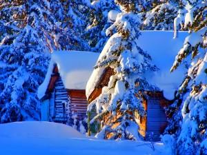 Cabañas rodeadas de pinos cubiertos de nieve