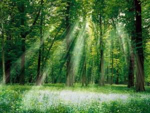 Rayos iluminando el bosque