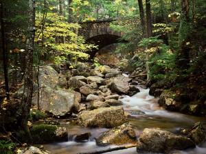Puente de piedra en el bosque