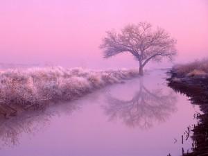 Paisaje invernal en el río