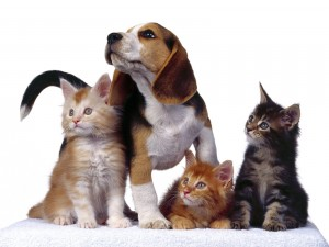 Un perro junto a tres gatos