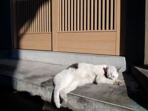 Gato durmiendo al sol