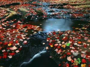 Hojas otoñales en el río