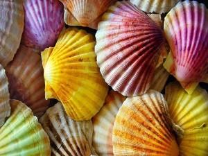 Conchas de mar de varios colores
