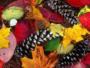 Piñas sobre hojas otoñales