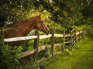 Caballo detrás de la cerca de madera