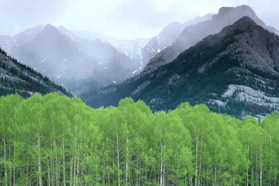 Montañas en Alberta