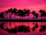 Hermoso sol tras las palmeras