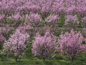 Hermosos árboles en flor