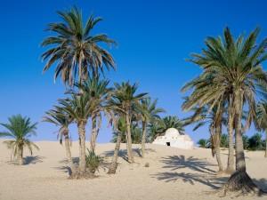 Desierto del Sahara (Túnez)