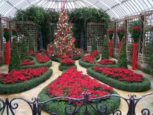 Árbol de Navidad en el jardín de invierno