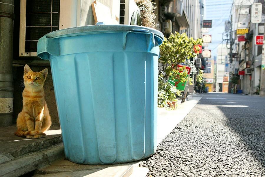 Gato junto a un cubo de basura