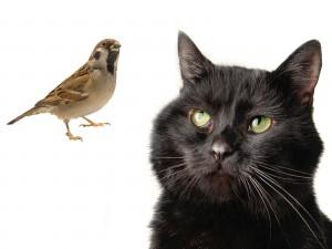 Gato mirando al pájaro