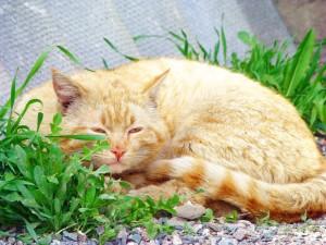 Un gato adormilado en el jardín