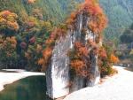 Árboles otoñales en una roca