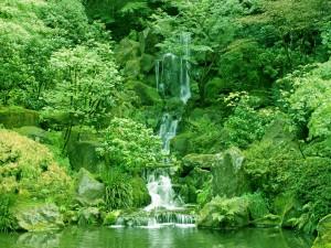 Flujo de agua sobre las rocas en un bosque verde