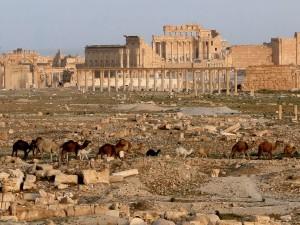 Camellos en las ruinas de Palmira