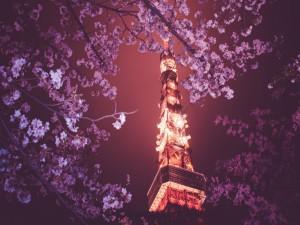 Vista de la Torre de Tokio a través de los cerezos en flor