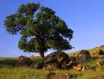 Rocas junto al árbol
