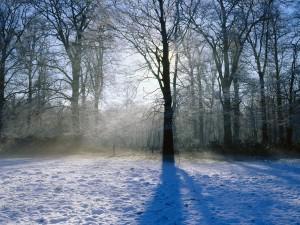 Mañana de invierno