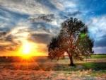 Radiante sol en una granja de Texas