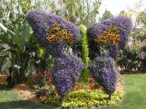 Flores en forma de mariposa