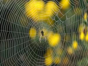 Araña trabajando en su tela