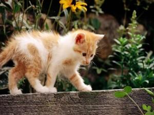 Gatito caminando sobre un tapia