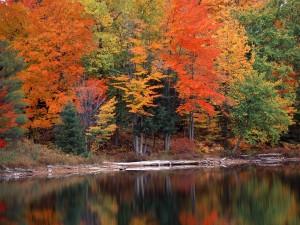 Árboles otoñales junto a un lago