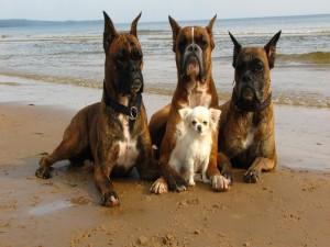 Cuatro amigos en la playa