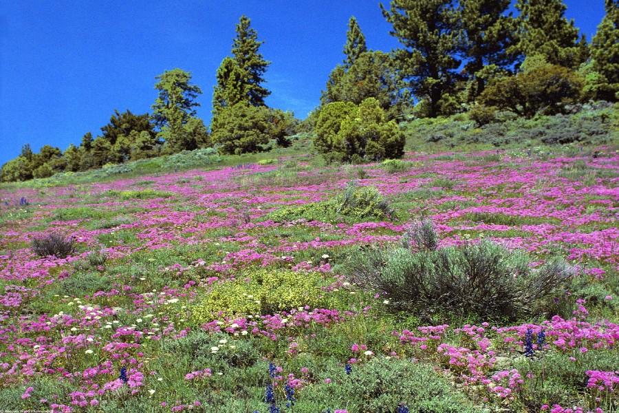 Flores silvestres en la colina
