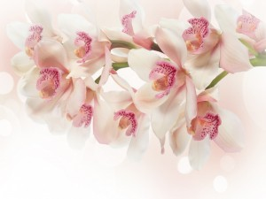Ramo de bellas orquídeas