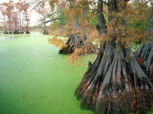 Lago Reelfoot (Tennessee)