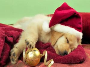 Cachorro descansando en Navidad