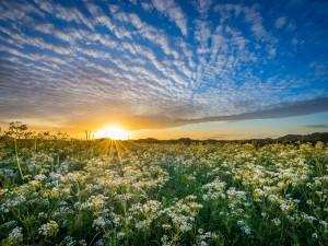 Salida del sol sobre un prado en floración