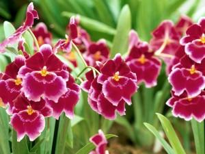 Pequeñas orquídeas