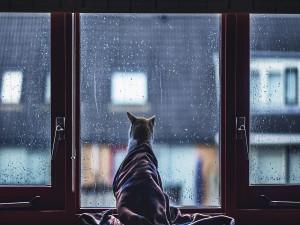 Gato envuelto en una manta mirando la lluvia por la ventana