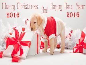 """Este cachorro os desea """"Feliz Navidad y Año Nuevo 2016"""""""