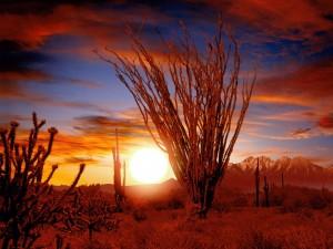 Amanecer en el desierto de Sonora (Arizona)